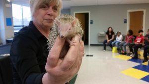 A Wildlife Defender holding a hedgehog