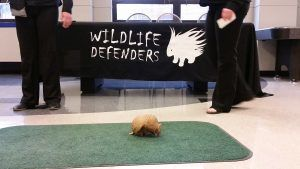 Armadillo is on the loose in the students.