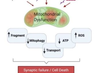 Tau Post-Translational Modifications and Mitochondrial Quality Control